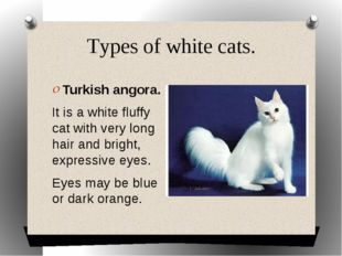 Types of white cats. Turkish angora. It is a white fluffy cat with very long