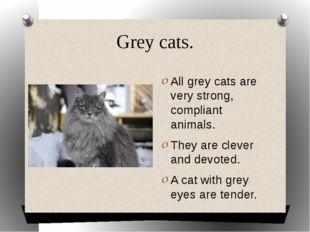 Grey cats. All grey cats are very strong, compliant animals. They are clever