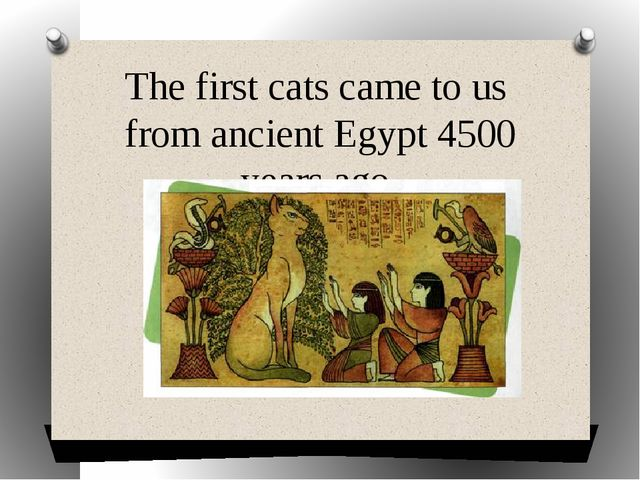 The first cats came to us from ancient Egypt 4500 years ago.
