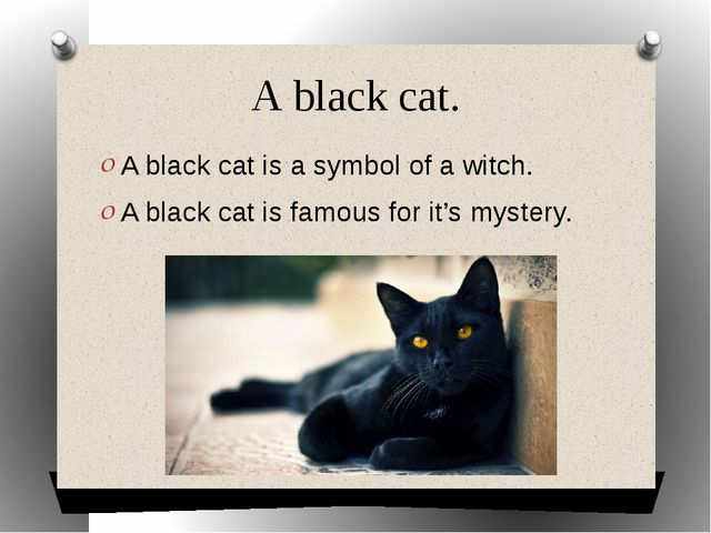 A black cat. A black cat is a symbol of a witch. A black cat is famous for it...