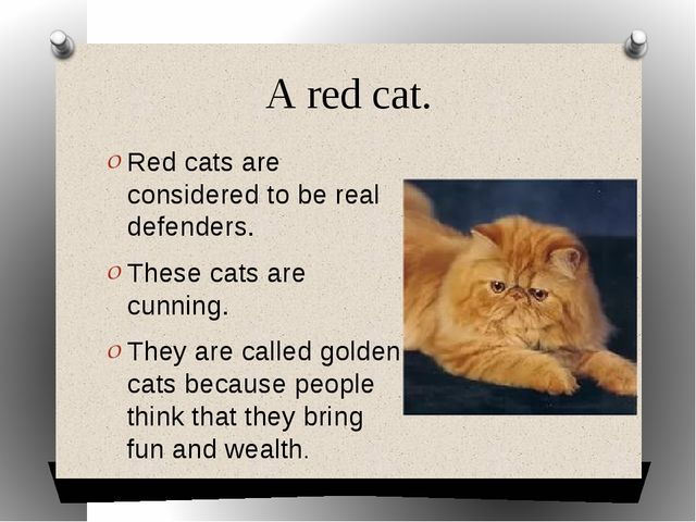 A red cat. Red cats are considered to be real defenders. These cats are cunni...