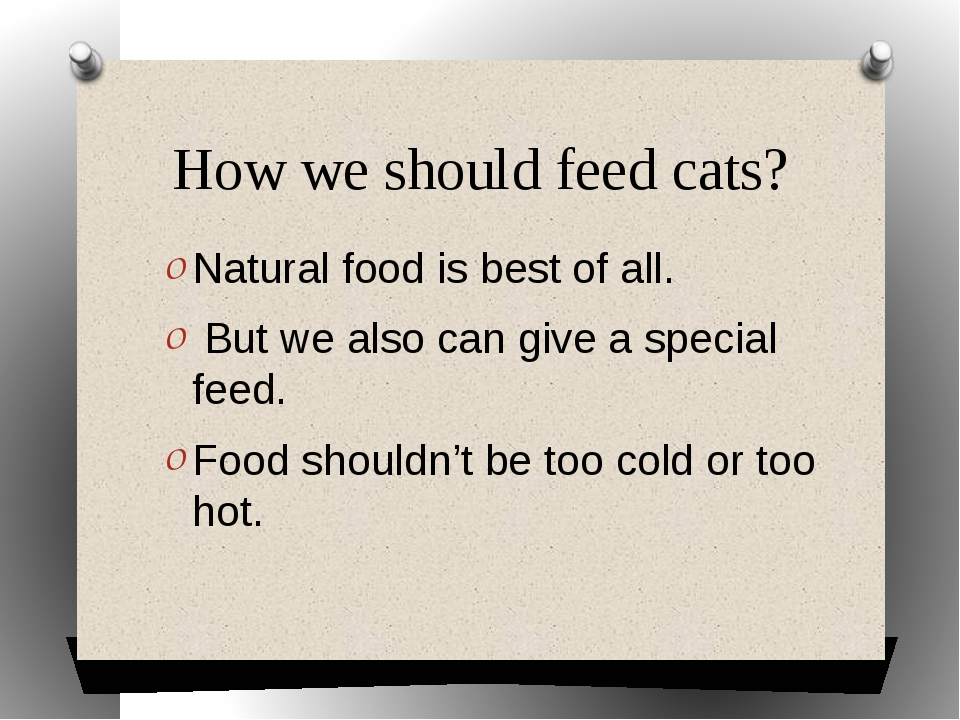 How we should feed cats? Natural food is best of all. But we also can give a...