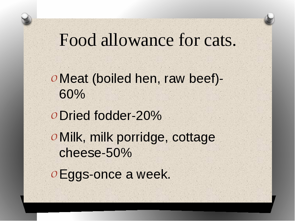 Food allowance for cats. Meat (boiled hen, raw beef)-60% Dried fodder-20% Mil...