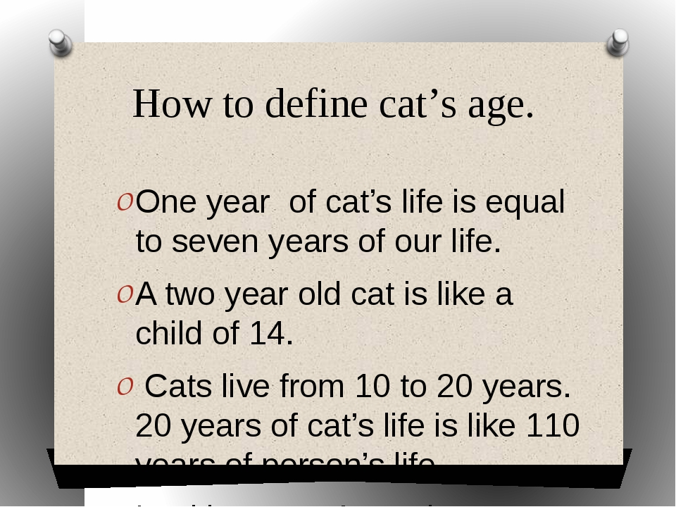 How to define cat's age. One year of cat's life is equal to seven years of o...
