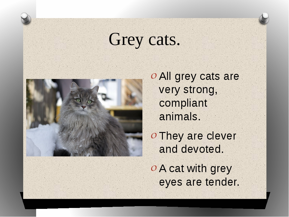 Grey cats. All grey cats are very strong, compliant animals. They are clever...