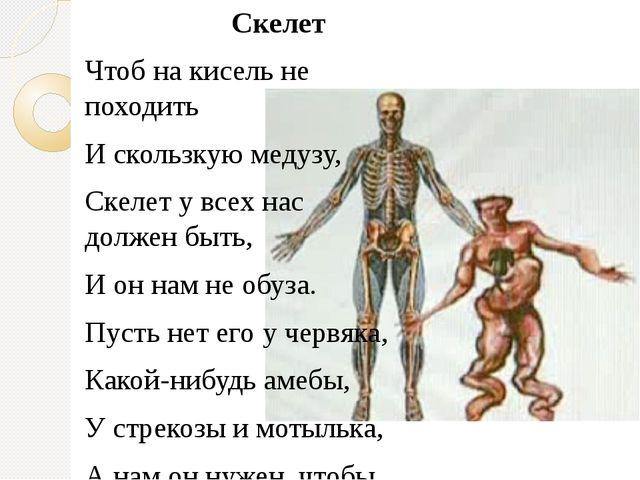 Скелет Чтоб на кисель не походить И скользкую медузу, Скелет у всех нас долж...