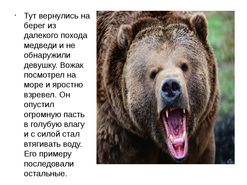 Тут вернулись на берег из далекого похода медведи и не обнаружили девушку. Во...