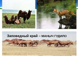 Разнообразен и животный мир этого уголка Заповедный край – МАНЫЧ ГУДИЛО