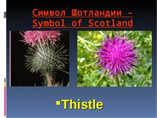 Символ Шотландии - Symbol of Scotland Thistle