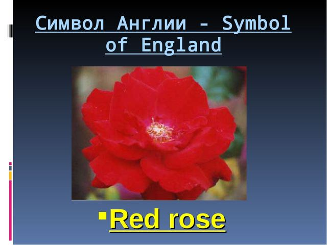 Символ Англии - Symbol of England Red rose