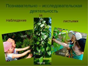 Познавательно – исследовательская деятельность Наблюдение за листьями сосны к