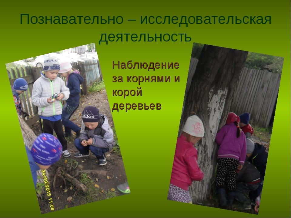 Познавательно – исследовательская деятельность Наблюдение за корнями и корой...