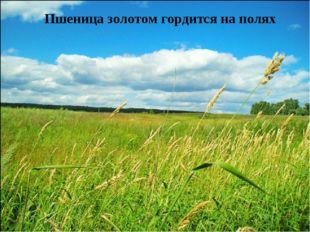 Пшеница золотом гордится на полях