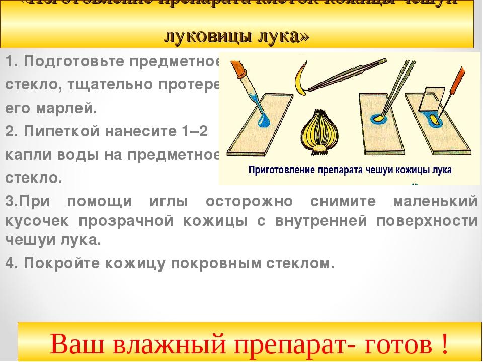 «Изготовление препарата клеток кожицы чешуи луковицы лука» 1.Подготовьте пре...