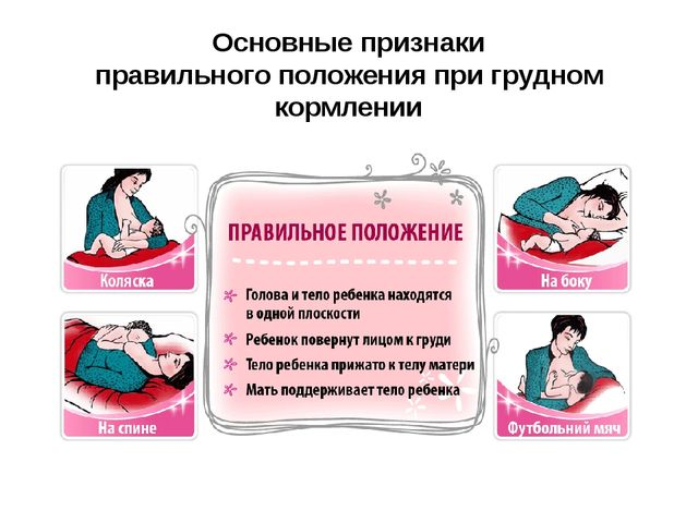 Основные признаки правильного положения при грудном кормлении