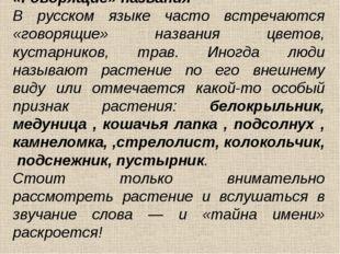 «Говорящие» названия В русском языке часто встречаются «говорящие» названия ц