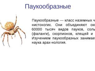 Паукообразные Паукообразные— классназемных чле-нистоногих. Они объединяют о