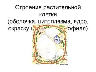 Строение растительной клетки (оболочка, цитоплазма, ядро, окраску придаёт хло
