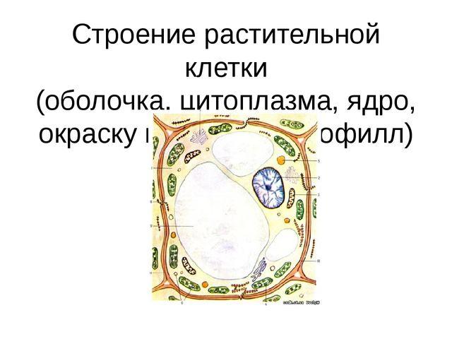 Строение растительной клетки (оболочка, цитоплазма, ядро, окраску придаёт хло...