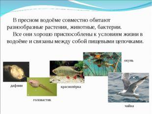 В пресном водоёме совместно обитают разнообразные растения, животные, бактер