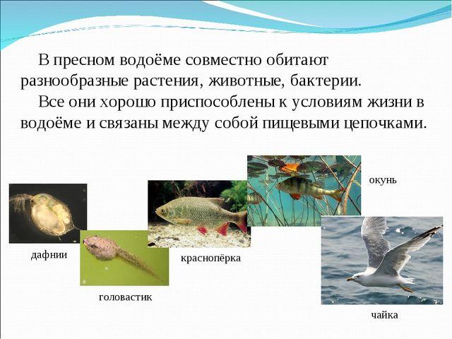 В пресном водоёме совместно обитают разнообразные растения, животные, бактер...
