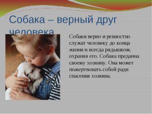 Собака – верный друг человека Собаки верно и ревностно служат человеку до кон