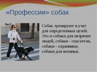 «Профессии» собак Собак тренируют и учат для определенных целей. Это и собаки