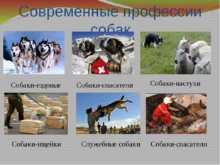 Современные профессии собак Собаки-спасатели Собаки-ездовые Собаки-пастухи Со