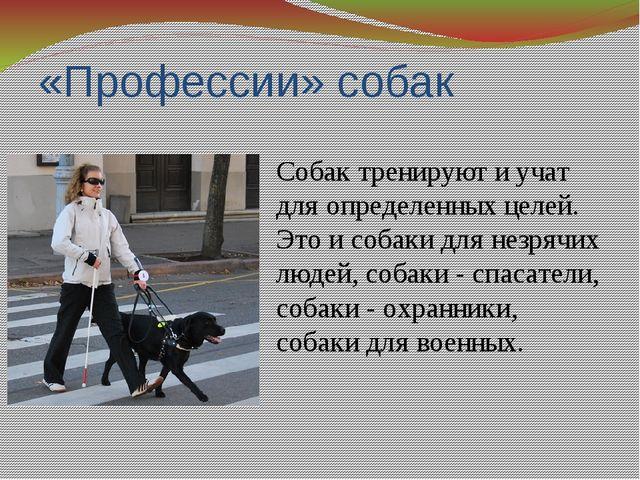 «Профессии» собак Собак тренируют и учат для определенных целей. Это и собаки...