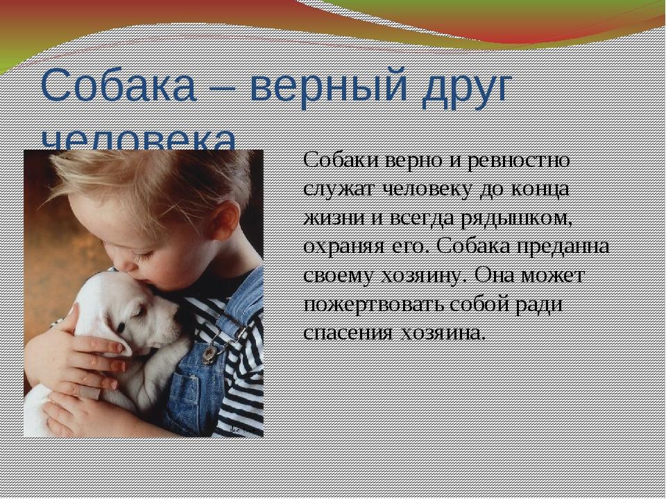 Собака – верный друг человека Собаки верно и ревностно служат человеку до кон...