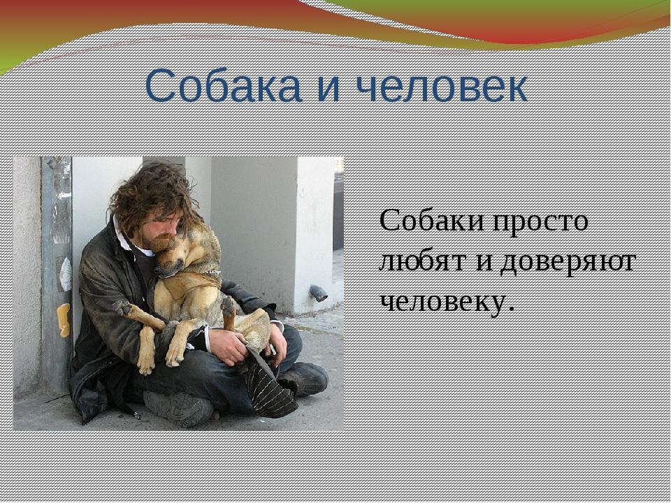 Собака и человек Собаки просто любят и доверяют человеку.