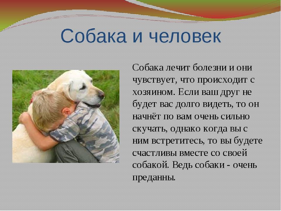 Собака и человек Собака лечит болезни и они чувствует, что происходит с хозяи...