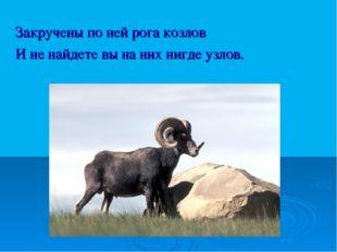 Закручены по ней рога козлов И не найдете вы на них нигде узлов.