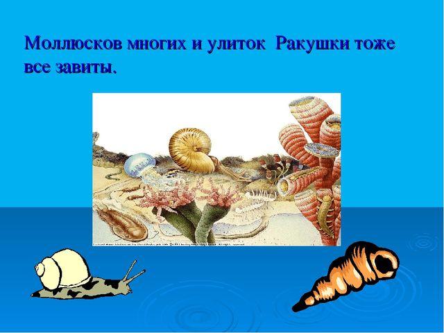Моллюсков многих и улиток Ракушки тоже все завиты.