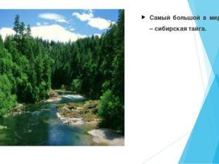 Самый большой в мире лес – сибирская тайга.