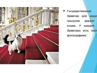 Государственный музей Эрмитаж для защиты от грызунов держит стаю кошек. У каж