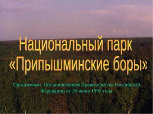 Организован Постановлением Правительства Российской Федерации от 20 июня 1993