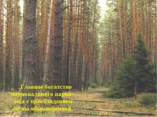 Главное богатство национального парка - леса с преобладанием сосны обыкновен
