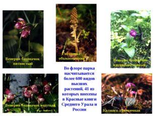 Во флоре парка насчитывается более 600 видов высших растений, 41 из которых в