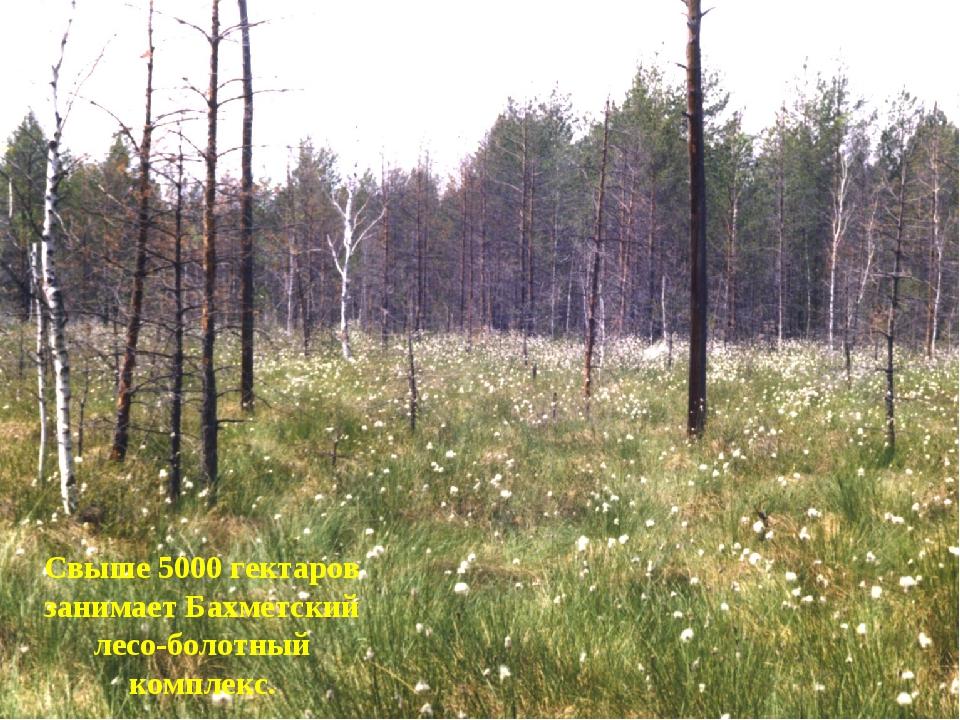 Свыше 5000 гектаров занимает Бахметский лесо-болотный комплекс.
