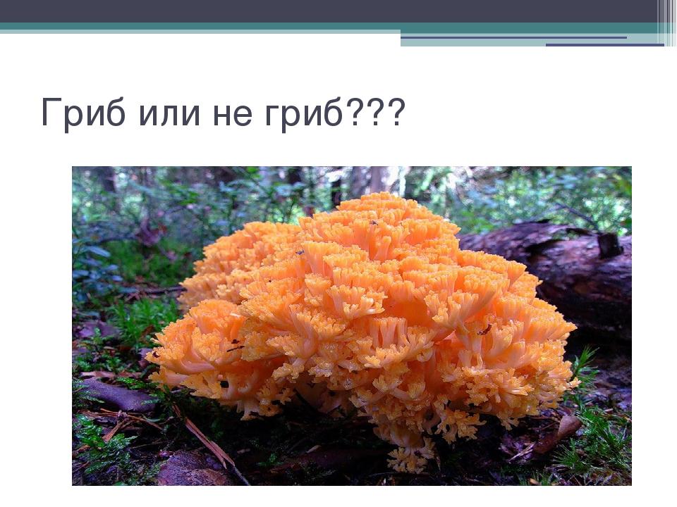 Гриб или не гриб???