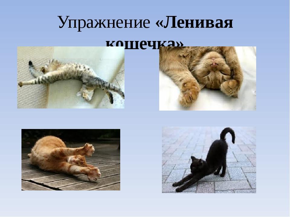 Упражнение «Ленивая кошечка»