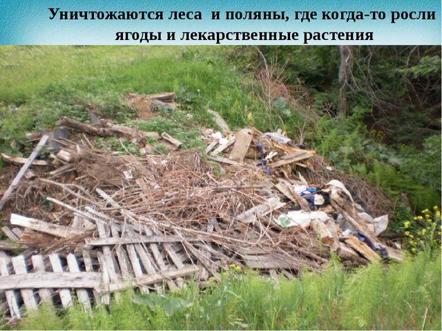 Уничтожаются леса и поляны, где когда-то росли ягоды и лекарственные растения