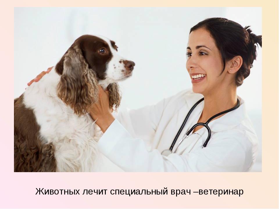 Животных лечит специальный врач –ветеринар