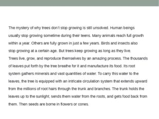 The mystery of why trees don't stop growing is still unsolved. Human beings