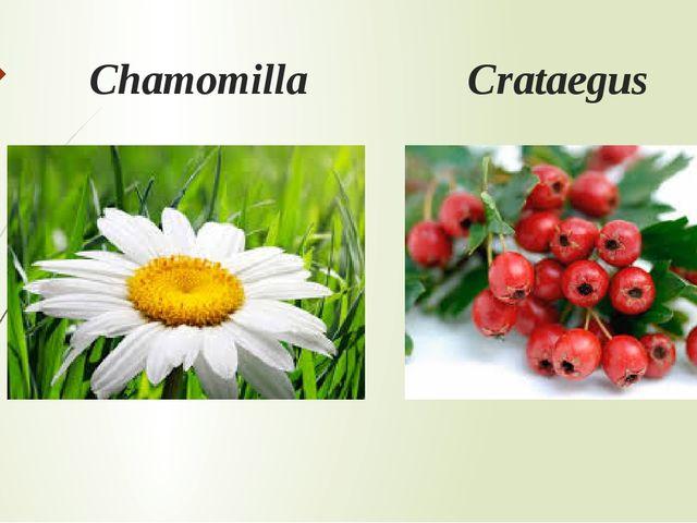 Chamomilla Crataegus