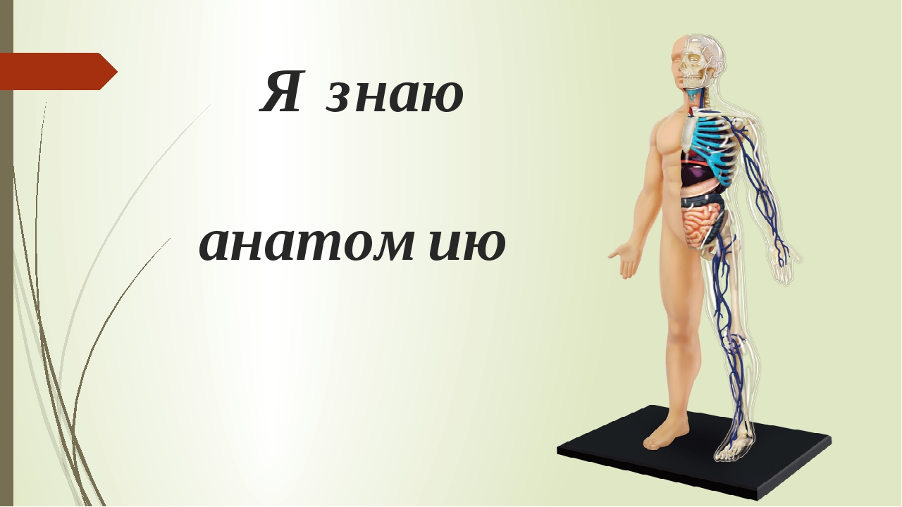 Я знаю анатомию