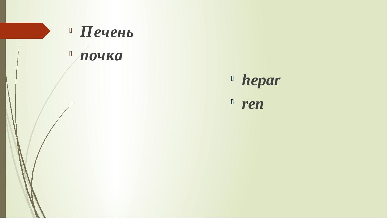Печень почка hepar ren