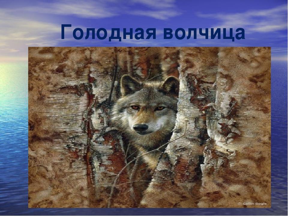 Голодная волчица