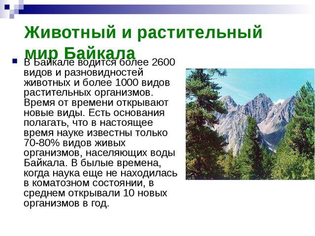Животный и растительный мир Байкала В Байкале водится более 2600 видов и разн...